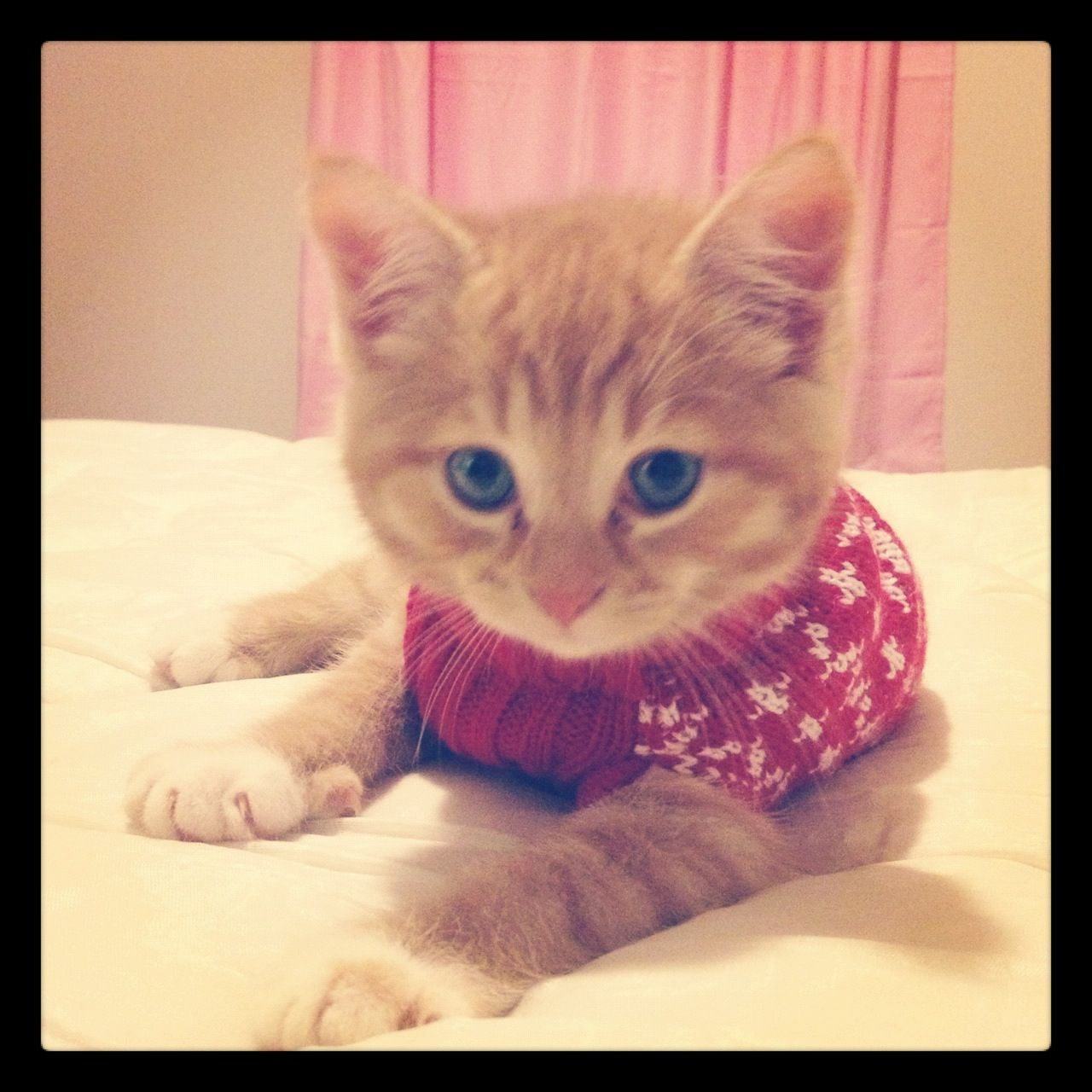 Kitten Christmas Sweater.Ashley S Little Yoshi Wearing His Christmas Sweater Kitty