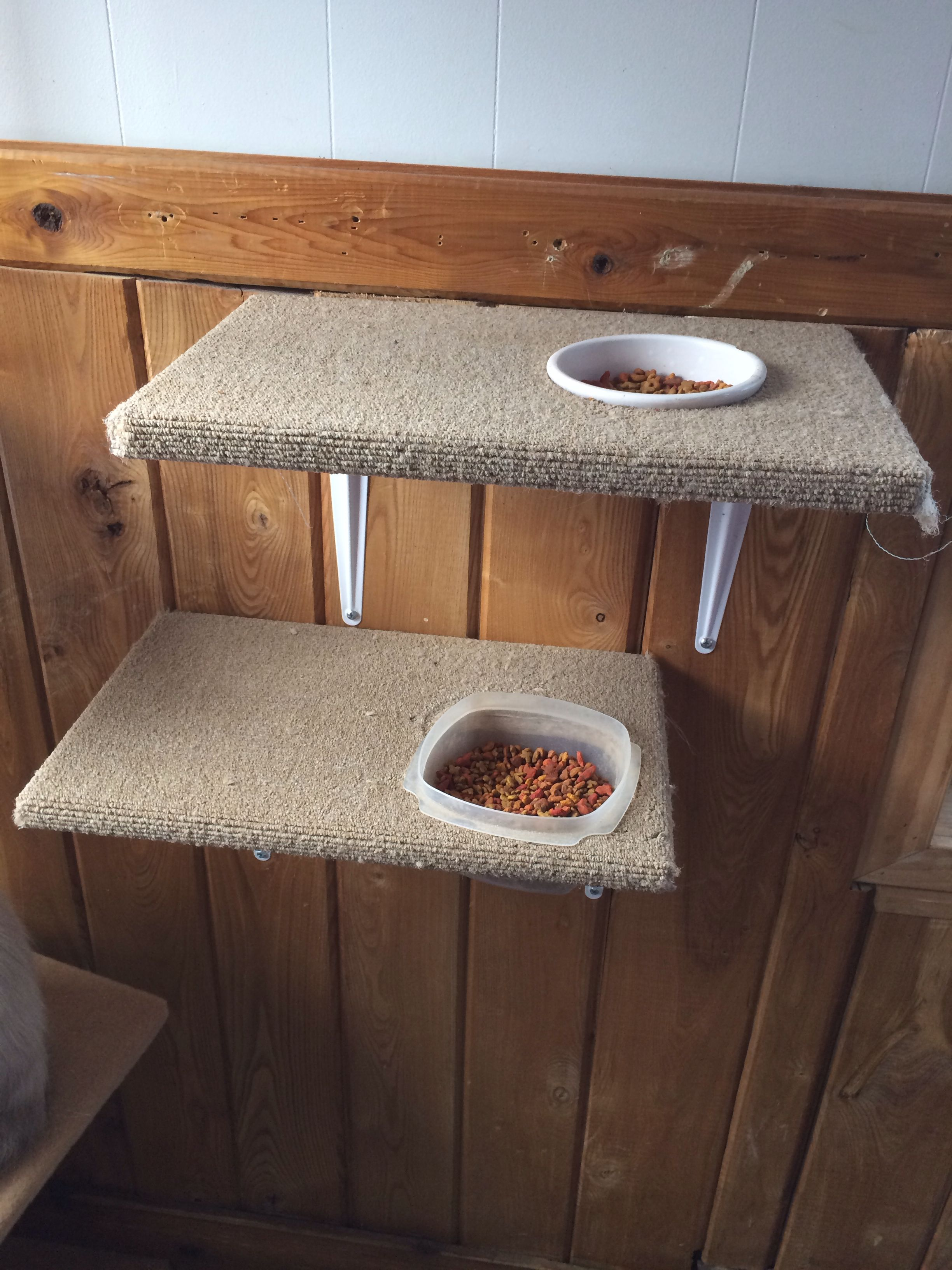Affordable Cat Shelves Cat Products Must Have Stuff For Cat Lovers Diy Cat