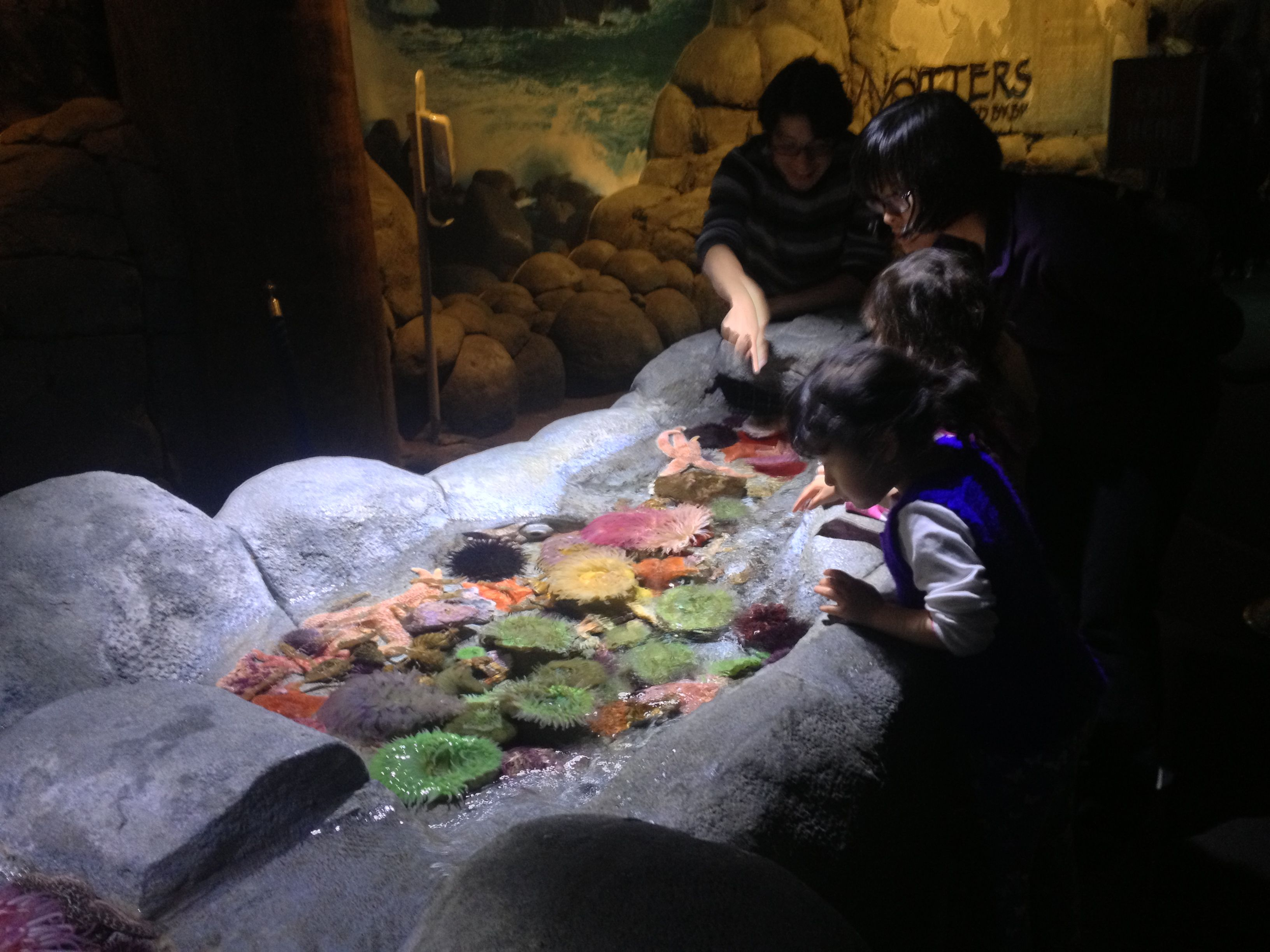 Touch Tank Under Cannon Led Pendants In 12 000k At Aquarium Of The Pacific
