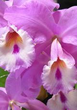 Cuidar las orqu deas en casa jardin pinterest - Cuidar orquideas en casa ...