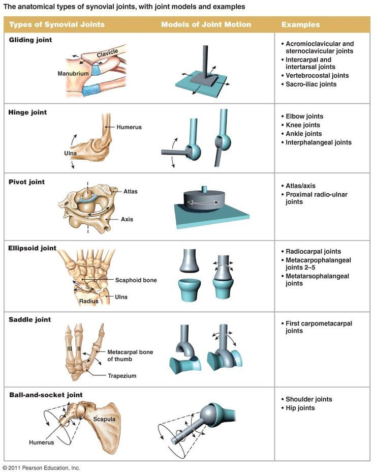 Anatomical Types Of Synovial Joints With Models Google Search