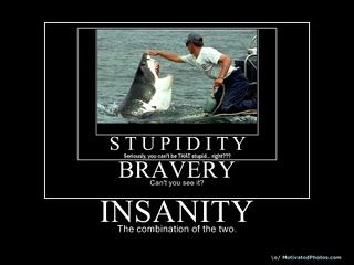 Insane Incognito And In Cahoots Joke With Images Jokes Funny Pictures Demotivational Posters