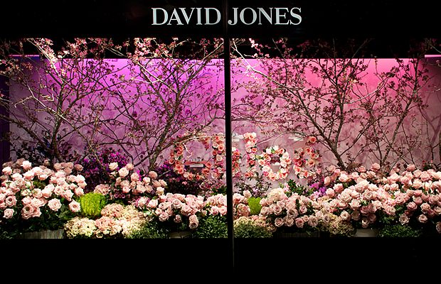 Luminescent The 2015 David Jones Flower Show Djstyle David