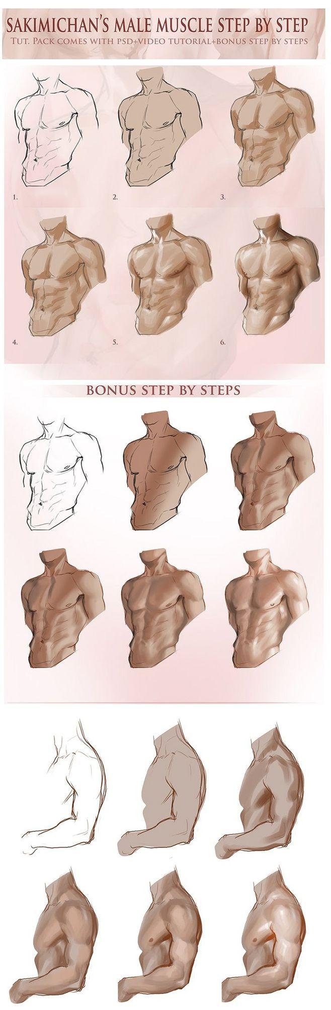 Torso masculino. Sombreado de músculos. | Referencias para dibujo ...