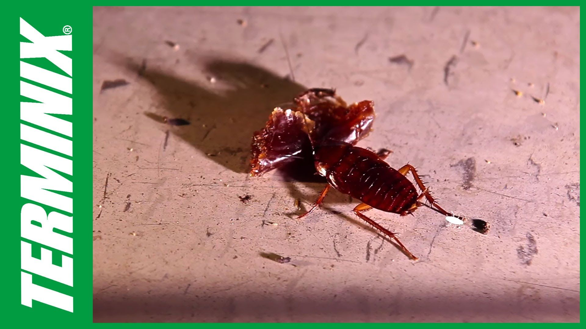 HowDoYouSay Roach? A functional way to use scientific