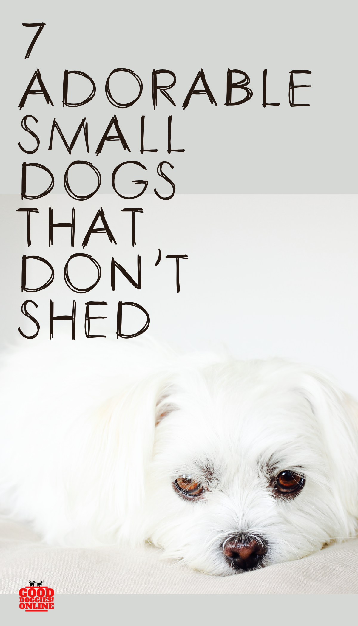 Looking For Hypoallergenic Dog Breeds That Don T Shed Check Out This List Of Small Dogs That Don T Shed Gooddoggies Do Dog Grooming Dogs List Of Small Dogs