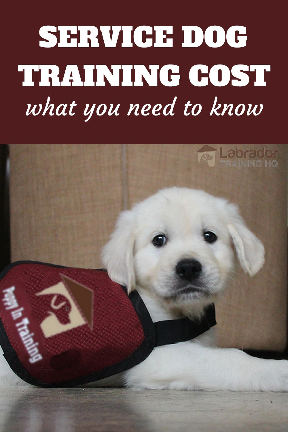 Service Dog Training Cost And What You Need To Know Service Dog