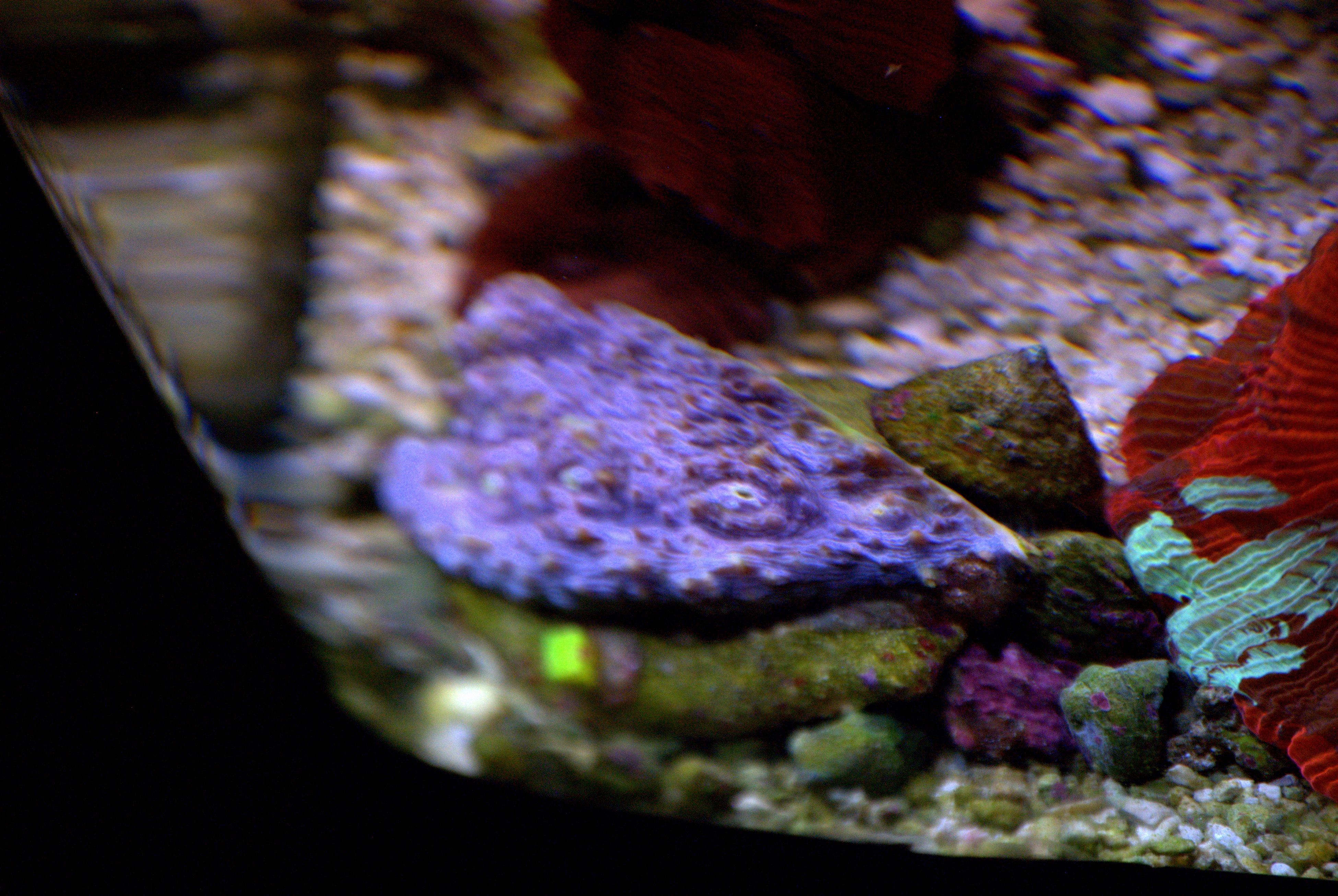 Galaxia Coral Our Saltwater Aquariums Pinterest