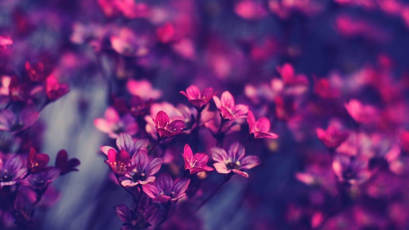 Vintage Tumblr Wallpapers Purple Flowers Wallpaper Hd Wallpapers For Laptop Funky Wallpaper