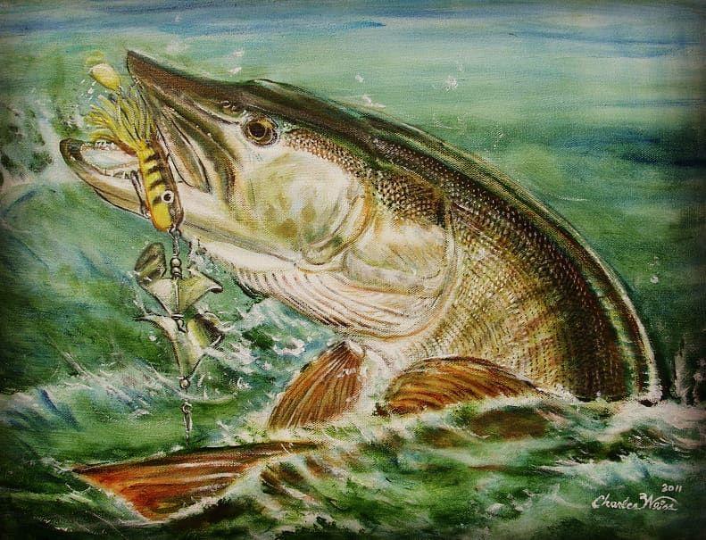 Pin On Fish Art