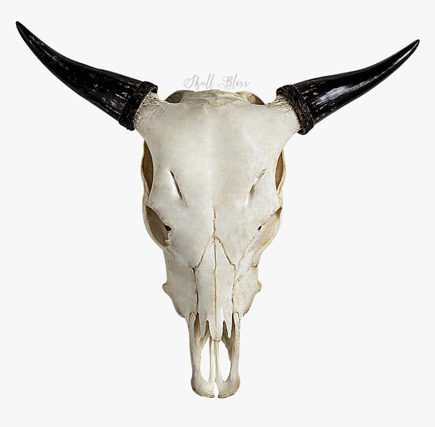 17 Bull Skull Png Di 2021