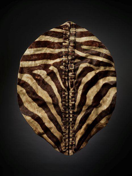 A very rare and elegant zebra hide Zulu shield  - | DESIGN