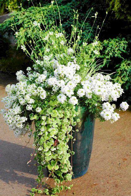 Kompozycja Z Bialych Kwiatow Na Tarasie Container Flowers Garden Containers Container Gardening