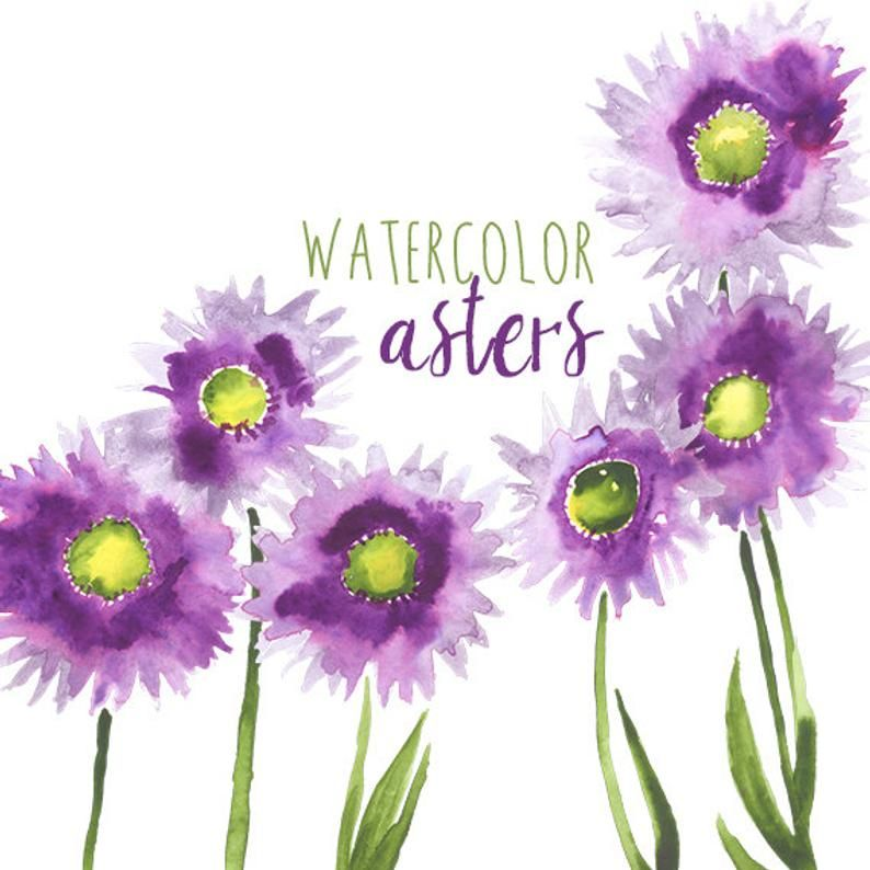 Aster Etsy Google Search Wreath Watercolor Floral Watercolor Flower Clipart