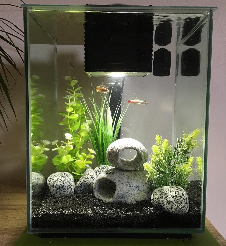 Lauren S Instagram Photo New Set Up In The Fishy House Fish Fishtank Aquarium Fishtanklife F In 2020 Fish Tank Design Fish Tank Decorations Fish Tank