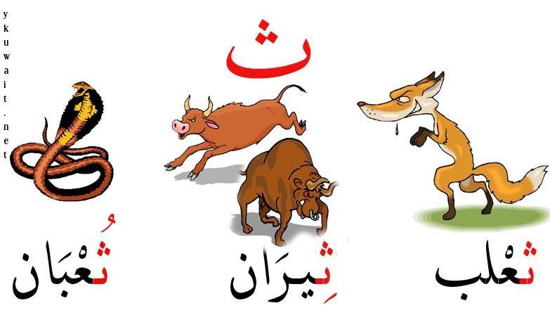بطاقات تعليم الحروف العربية بالصور منتدى ياكويت Learning Arabic Learn Arabic Language Arabic Alphabet