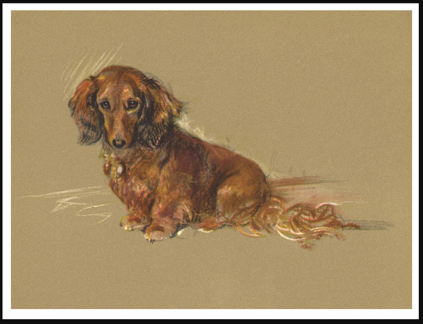 11 99 Long Haired Dachshund Seated Dog Charming Vintage Style