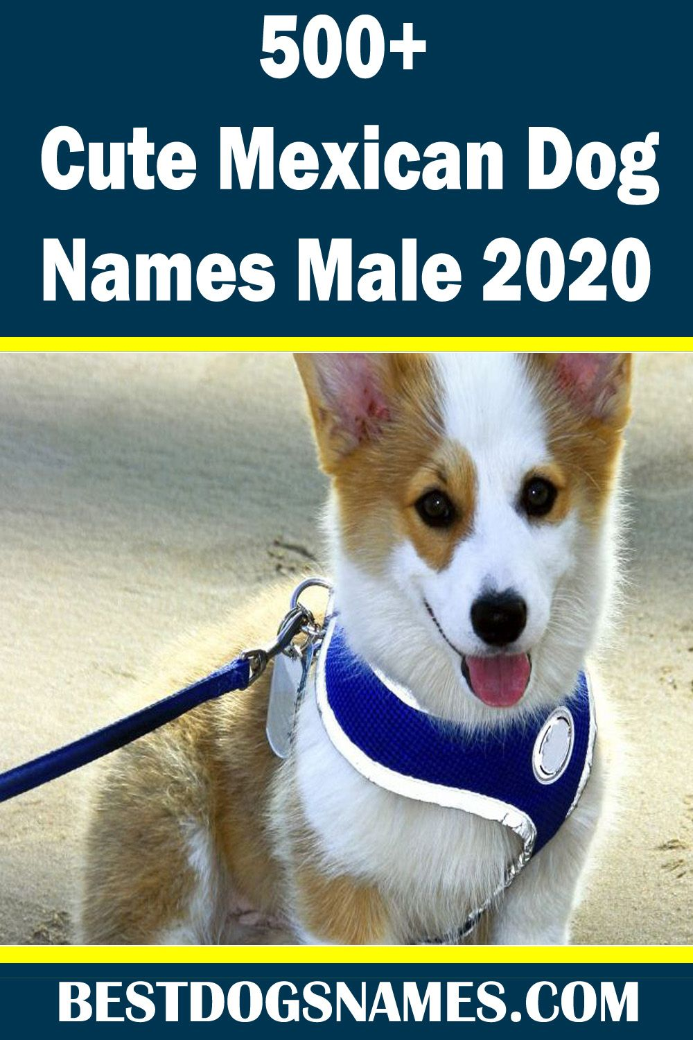 Looking For The Cute Mexican Dog Names Male Then Feel Welcome