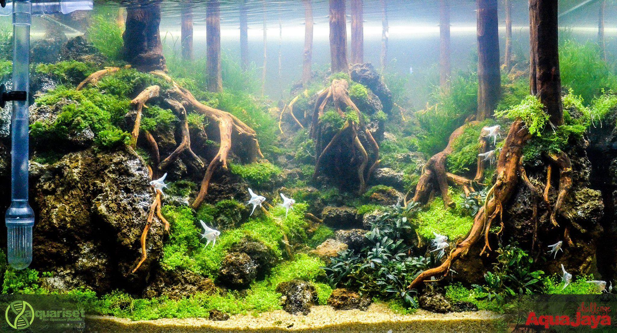 e1ec1d2255149911204c3d48762e11a4 Frais De Aquarium En Bois Schème