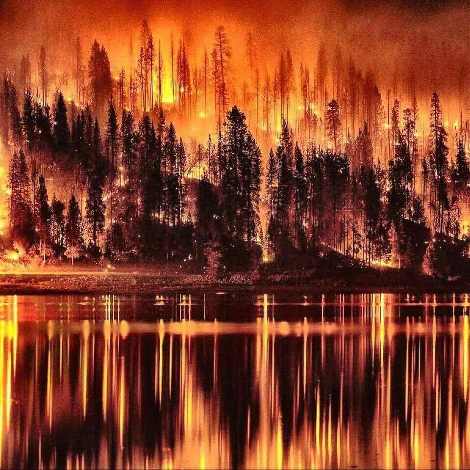 Forest Fire Pejzazhi Abstraktnoe Abstraktnaya Zhivopis