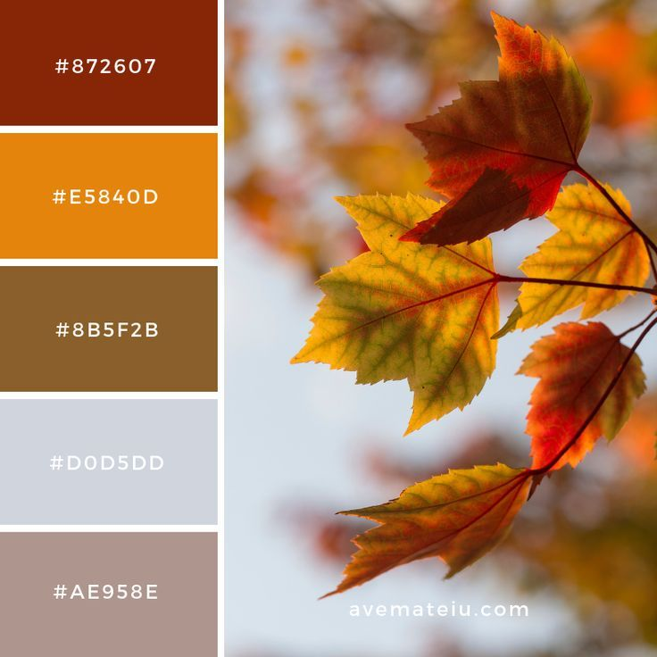 Leaves, leaf, fall and autumn Color Palette #35