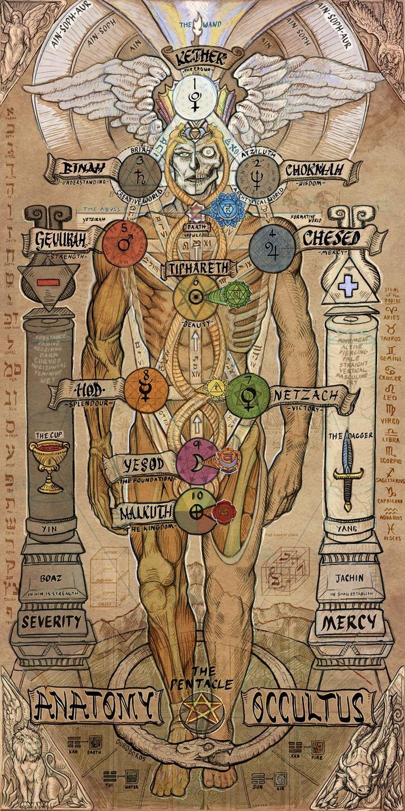 Anatomy Occultus - 9x18