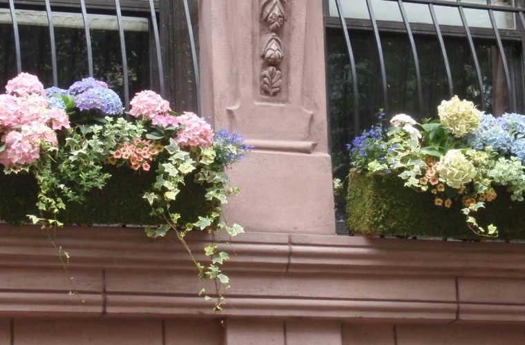 Image result for planting hydrangeas in window boxes