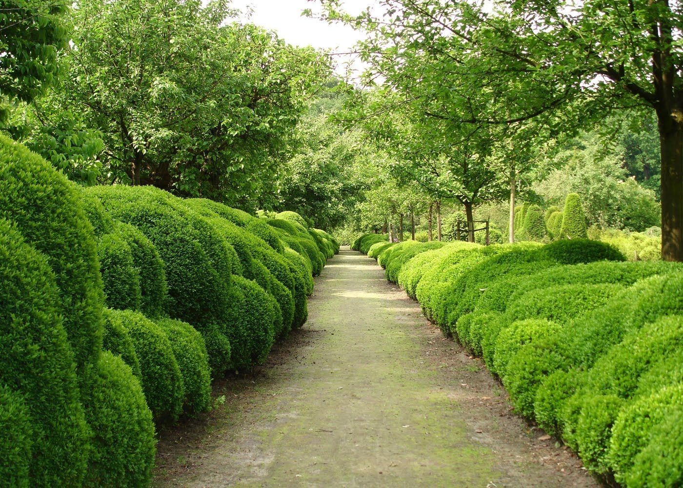 Belgian garden designer Jacques Wirtz' famous cloud boxwood hedging. Perfection.