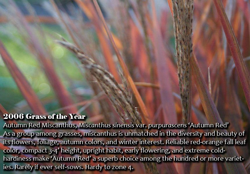 Grass of the year nebraska statewide arboretum