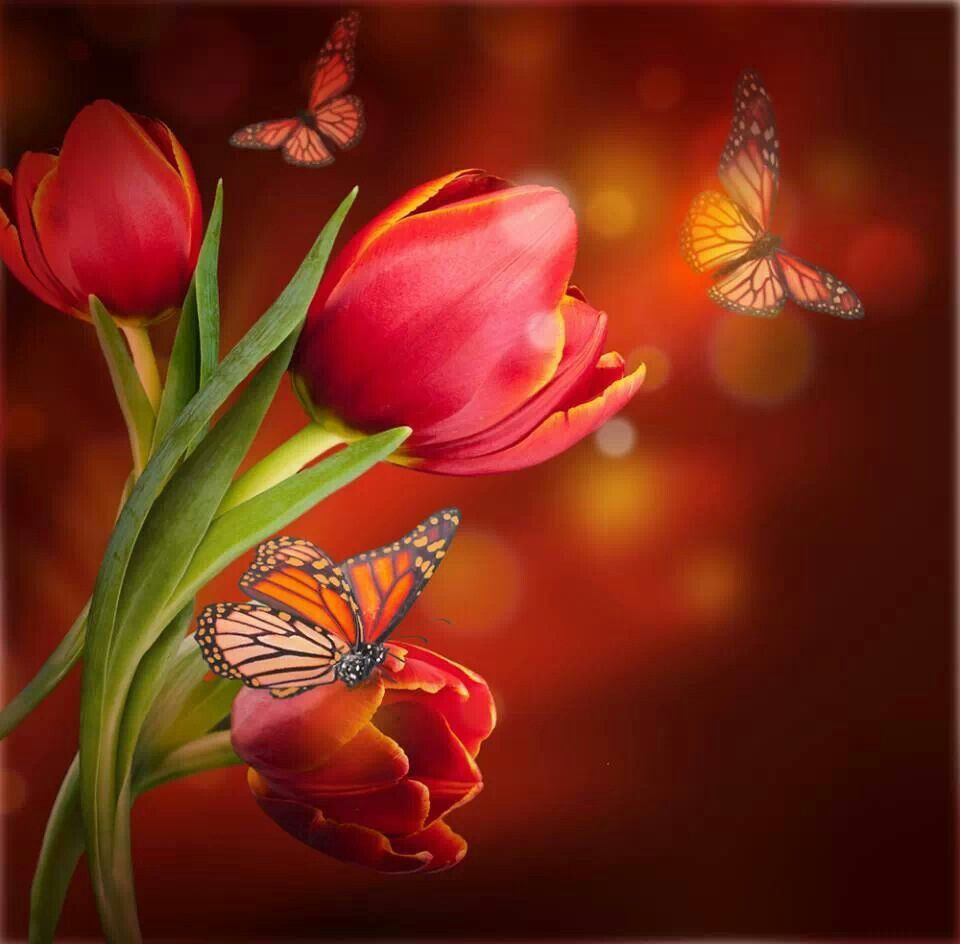 Beauty mariposas pinterest butterfly flora and red tulips