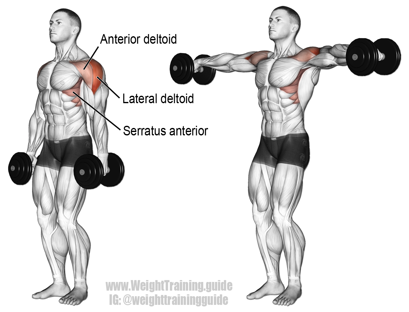 Dumbbell lateral raise exercise guide and video