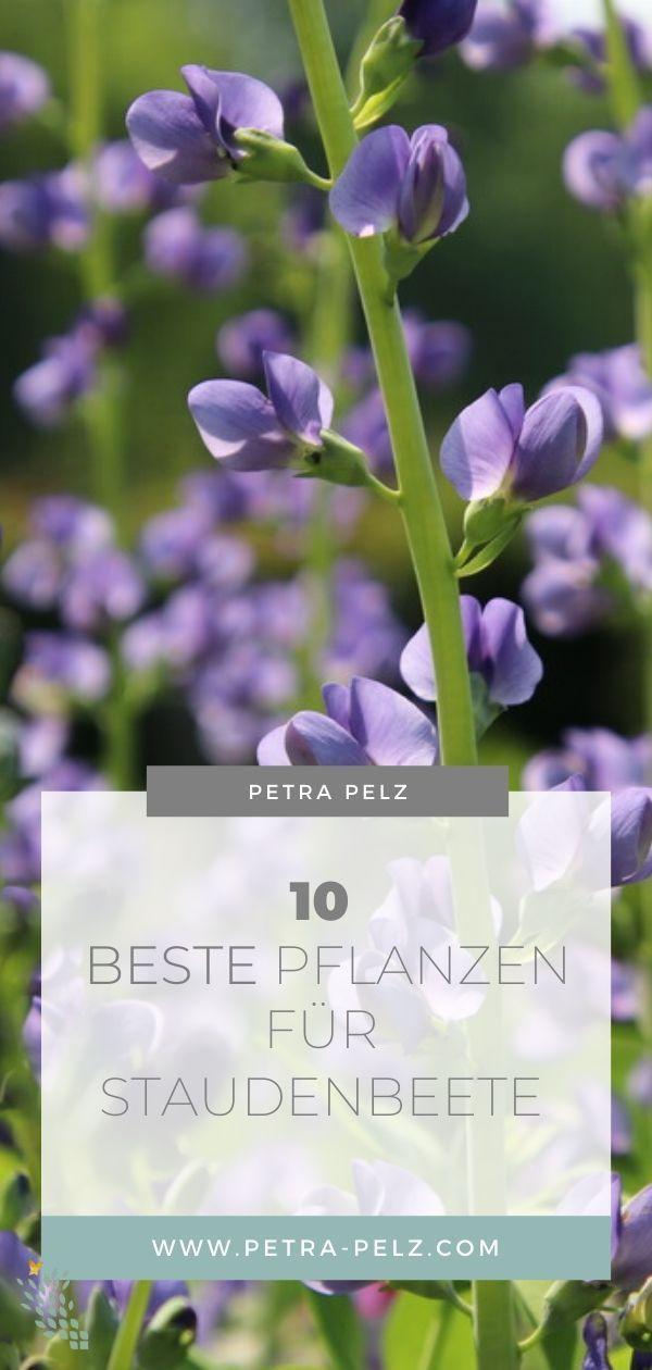 Diese 10 Pflanzen sind nicht nur schön, sondern auch vital und pflegeleicht.