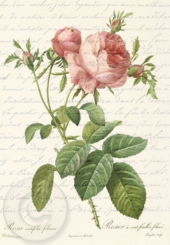 Fiori Vintage.Antique Vintage Pink Rose French Love Letter Digital Download Art
