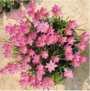 Pin Di Tanaman Hias Bunga