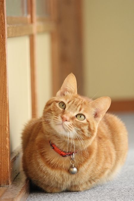 Cat Facts Why Orange Cats Are Usually Male Cattime Orange Tabby Cats Cute Cats Pretty Cats