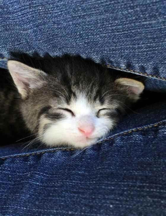 A tiny kitten was found meowing aloud during a rainstorm
