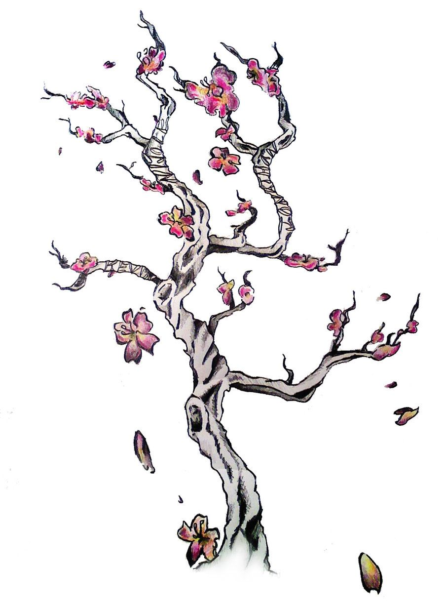 symbolism of cherry blossom tree | Japanese Cherry Blossom Tattoo ...