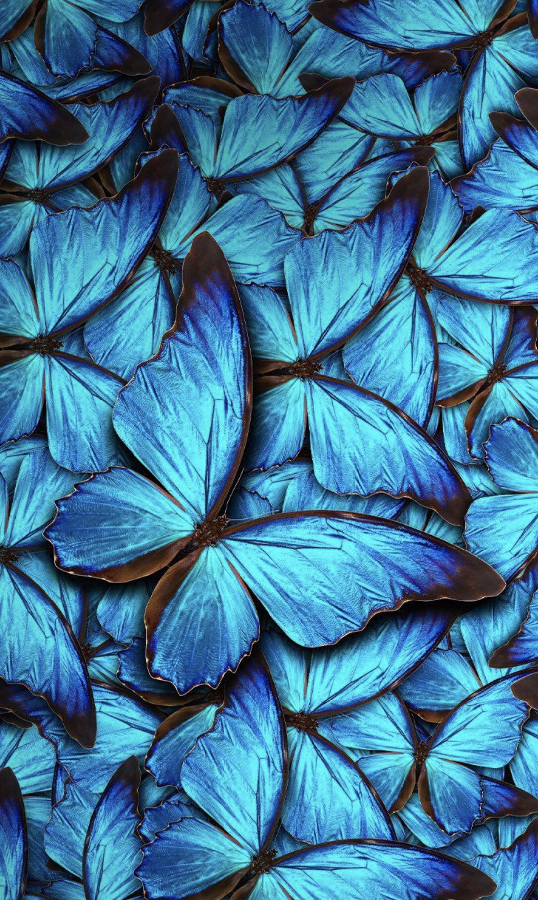 Blue Butterfly Aesthetic Pictures