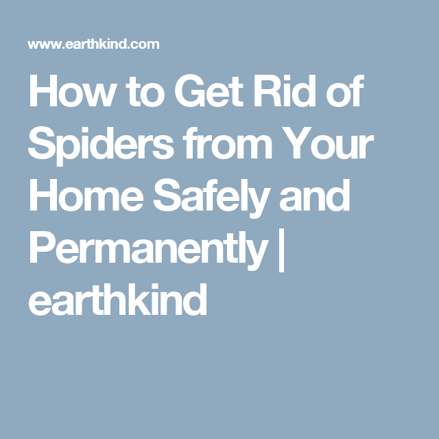 How to Get Rid of Spiders from Your Home Safely and Permanently | earthkind