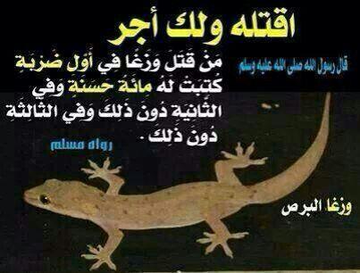 من قتل وزغا في أول ضرية كتبت له مائة حسنة Ahadith Islam My Love
