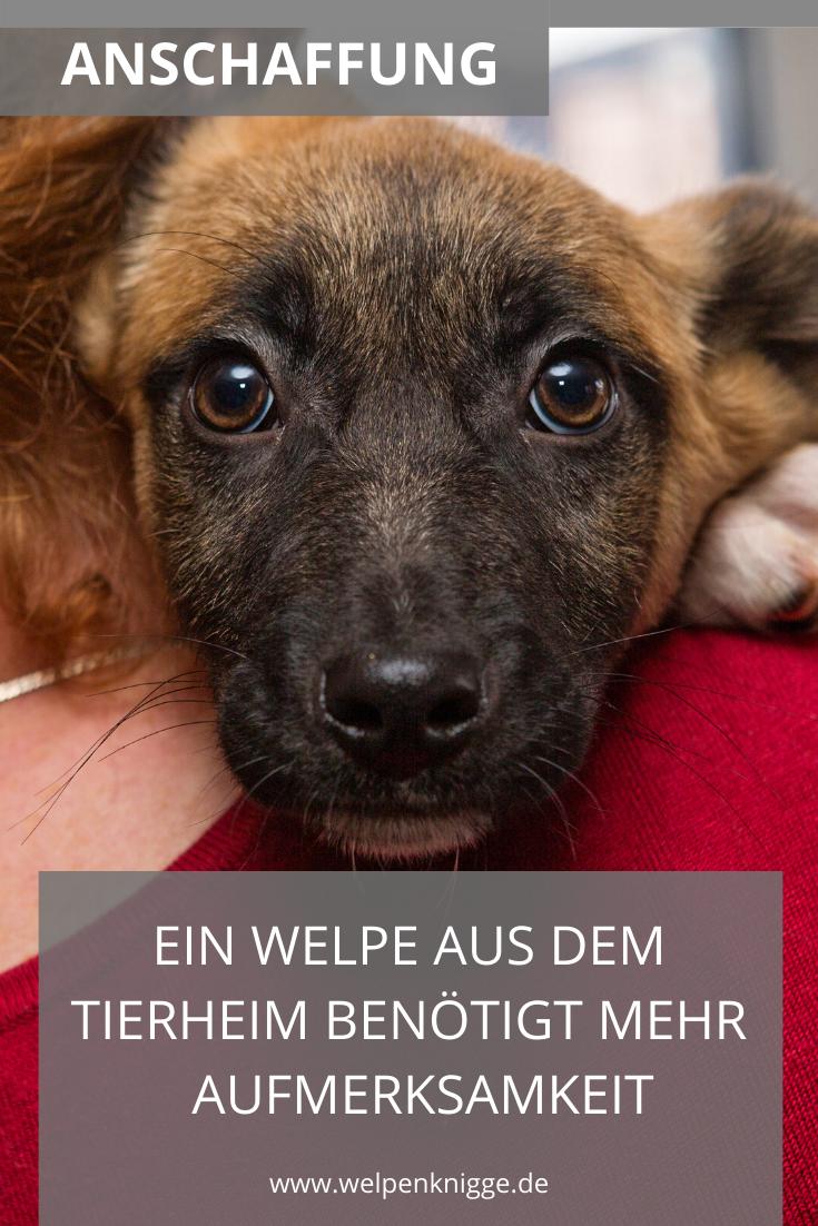 Welpen Aus Dem Tierheim Was Sie Von Anderen Welpen Unterscheidet Worauf Du Dich Einstellen Musst In 2020 Welpen Tierheim Tiere