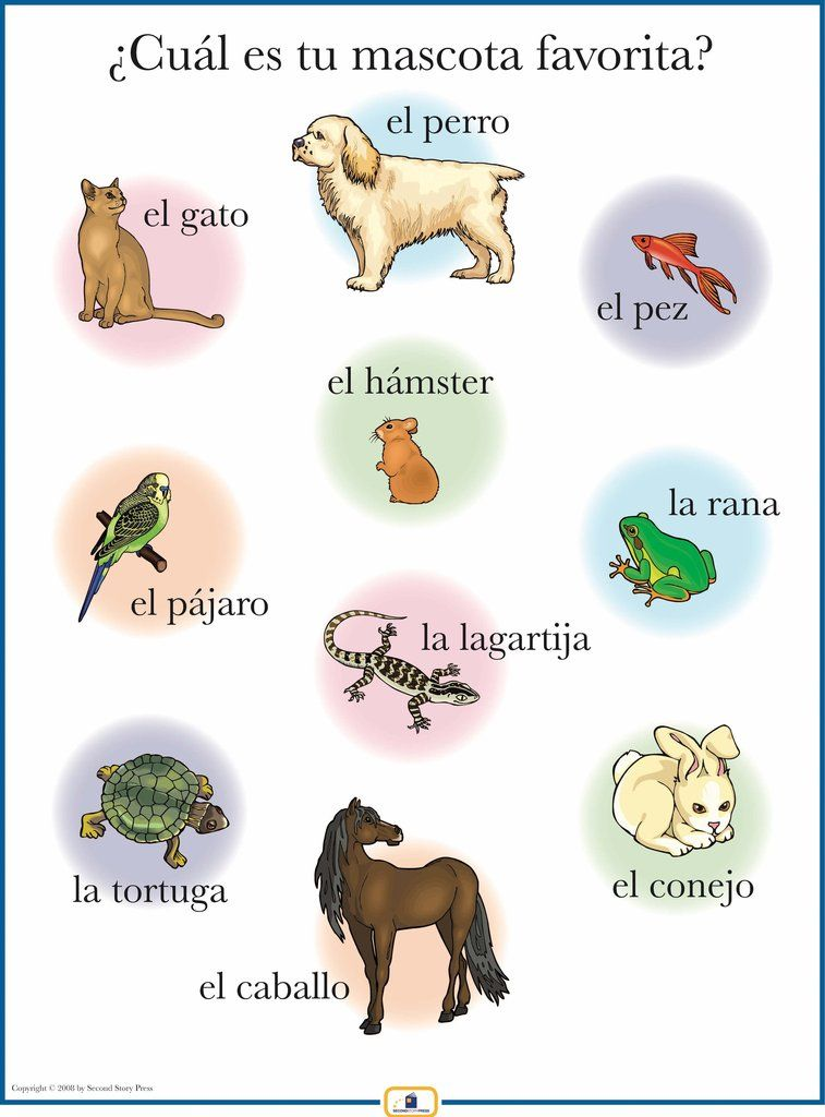Spanish Pets Poster Learning spanish, Learn french