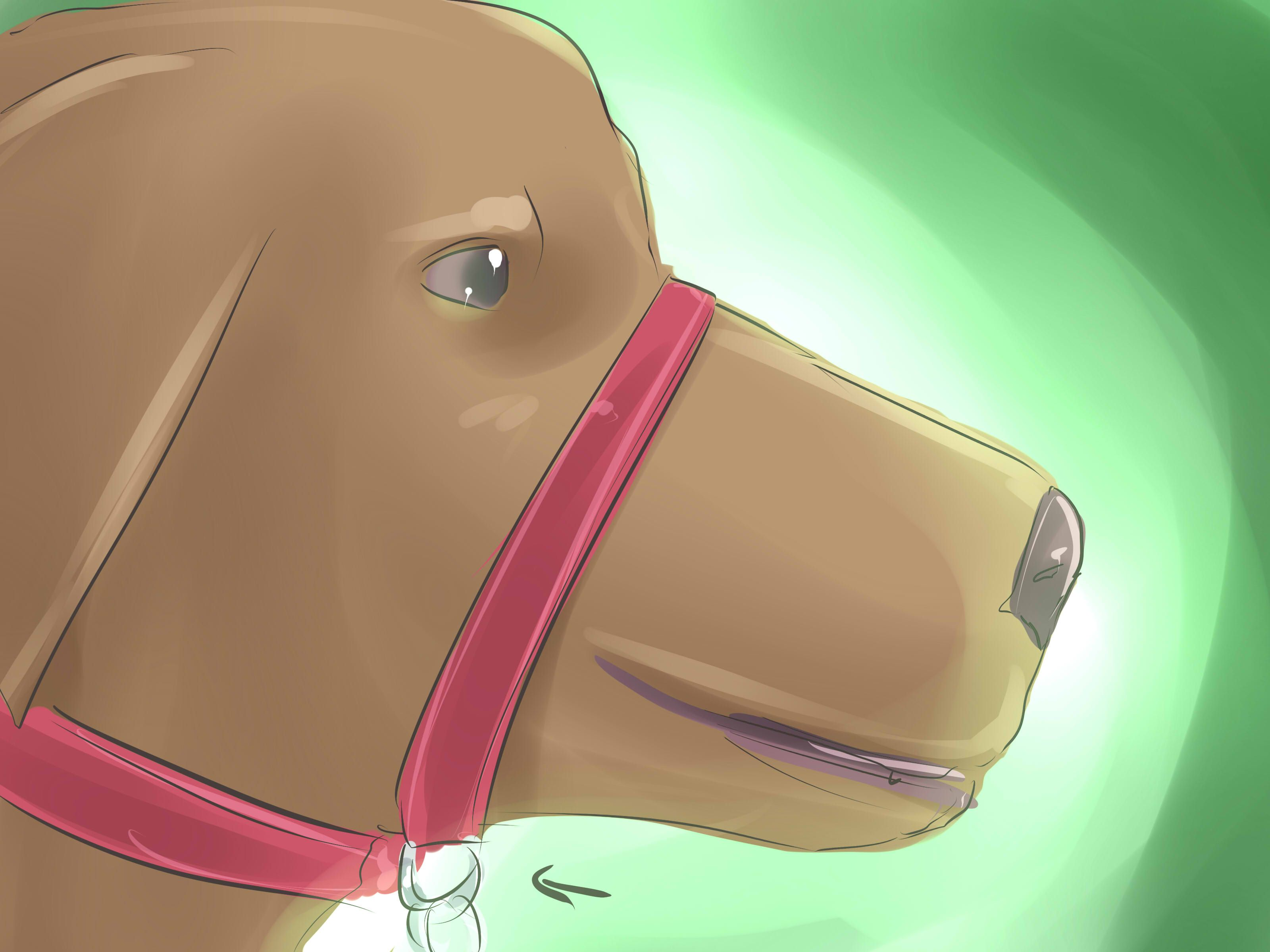 How To Put A Gentle Leader On A Dog Gentle Leader Leader Dogs
