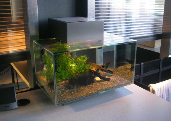 Unique fishtanks some of the most unique aquariums for for Unique fish tanks for sale