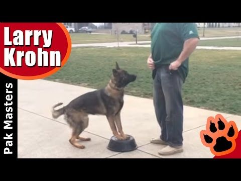 How To Teach Any Dog A Competition Style Heel Youtube Dog Training Training Your Dog Dog Training Obedience