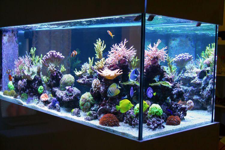 Aquarium einrichten fische-ideen-einrichtungsbeispiele  Aquarium