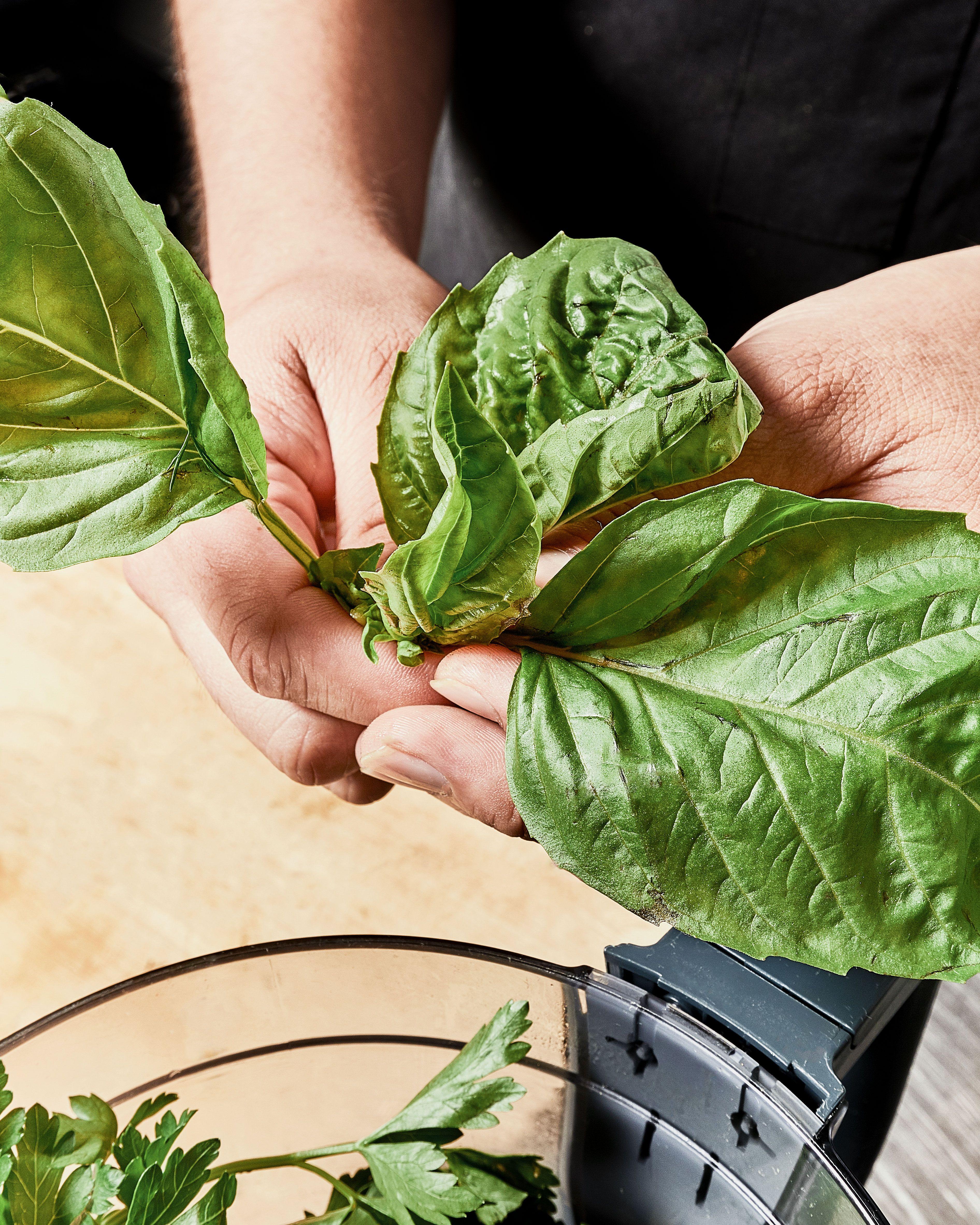 Basil Basil Basil Sweetgreen Green Goddess Ranch Green Goddess Plant Leaves Green [ 4730 x 3784 Pixel ]