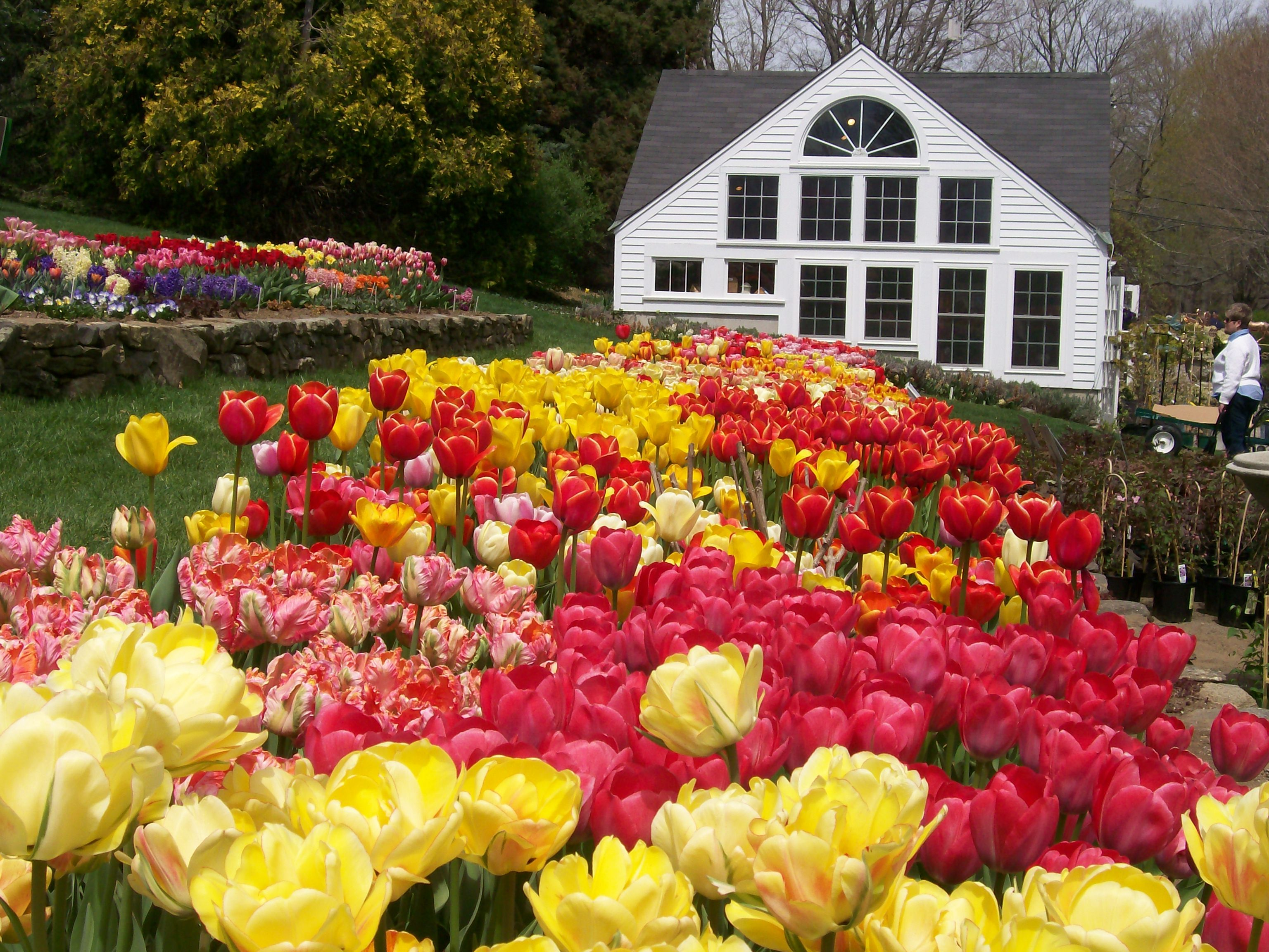 White Flower Farm Route 63 Litchfield Connecticut White Flower Farm Litchfield New England