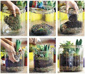 Diy Cool Plant Terrariums Terrariums Pinterest Terraria Plants And Gardens