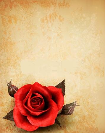 الحياة الحب مايو 2014 Molduras Vermelhas Rosas Vermelhas Cartas De Flor